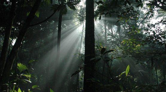 rain-forest-nias-island-indonesia_23909_990x742